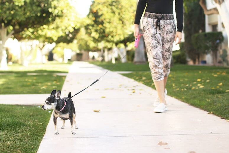 walking the dog outside working from home tips